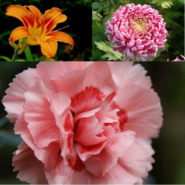 лилии, гвоздики, хризантемы