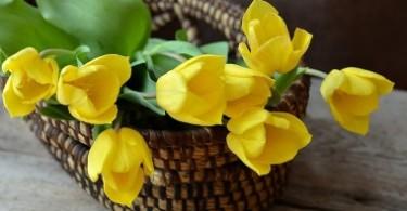 Желтые цветы для девушки