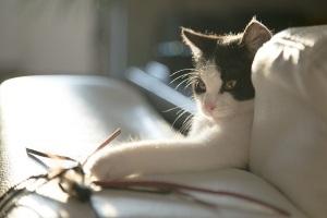 Маленький котенок в подарок